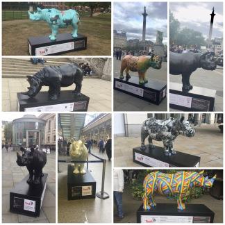 Tusk Rhino collage 2